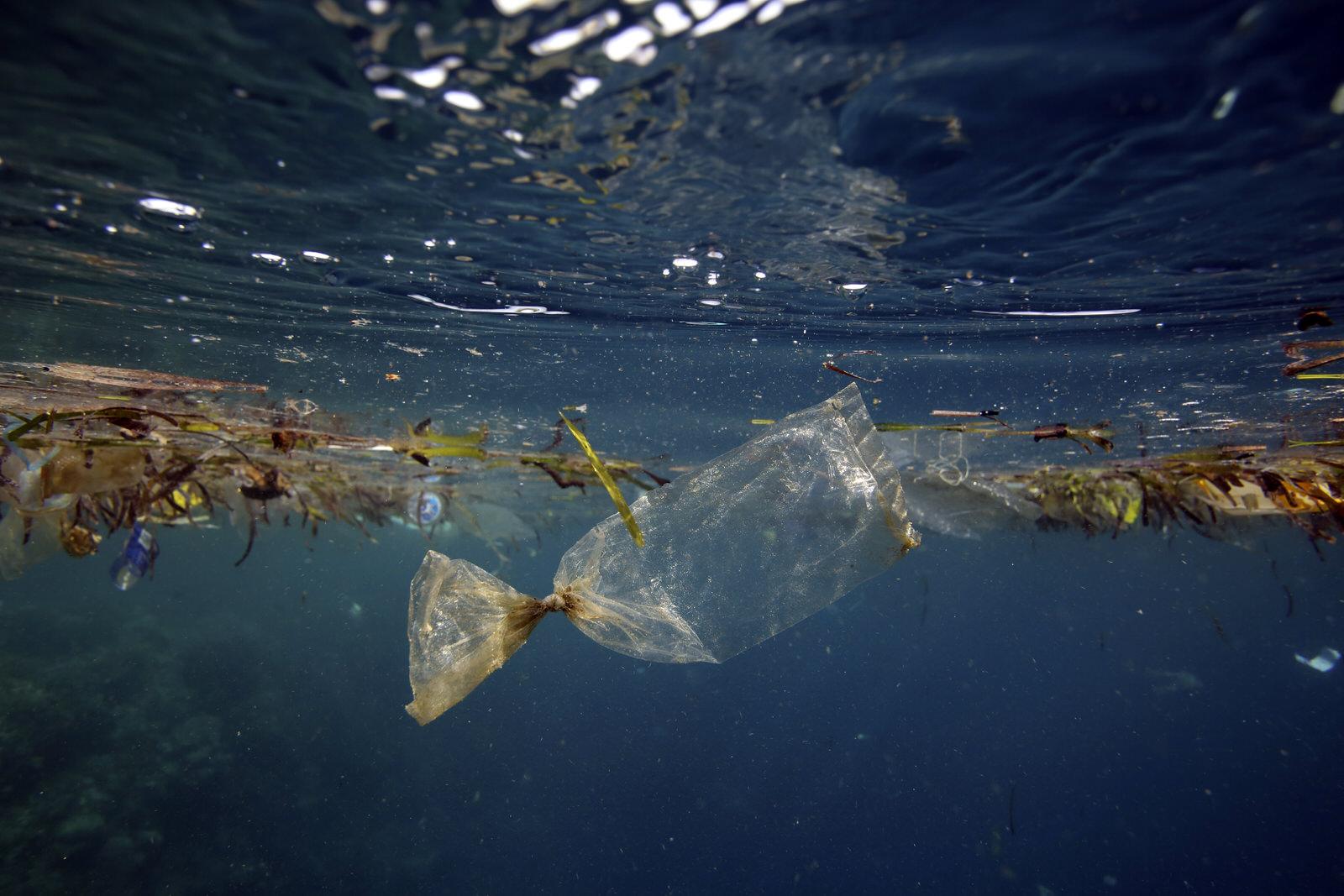 5 việc làm thiết thực cứu môi trường biển ai cũng có thể làm hàng ngày