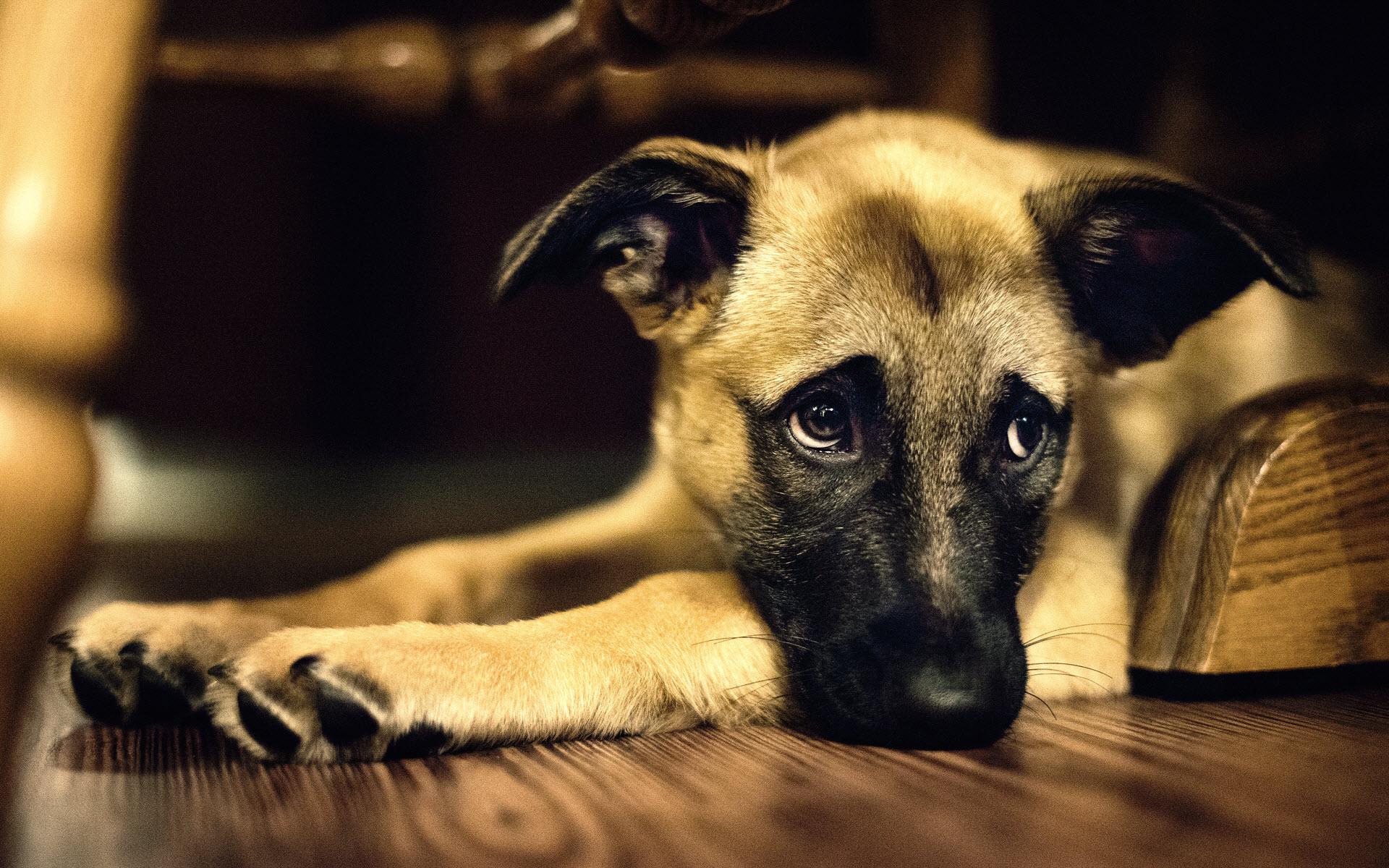 Chuyện về cái chết của những con chó