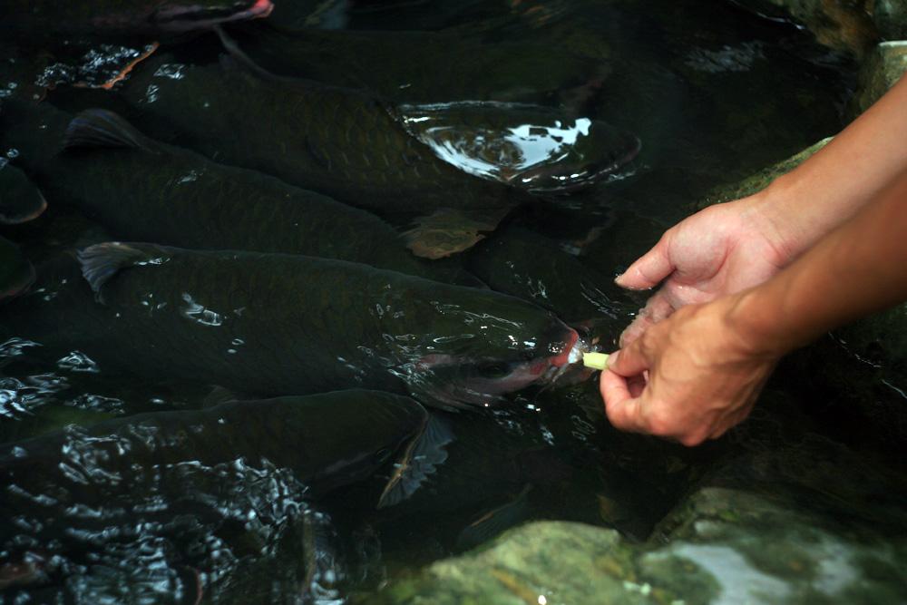 Chùm ảnh: Khám phá suối cá thần nổi tiếng nhất Việt Nam