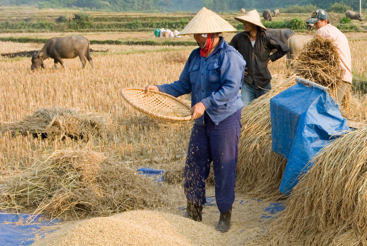 Tiếng Việt ngày nay 'bá đạo' 'vãi lúa'
