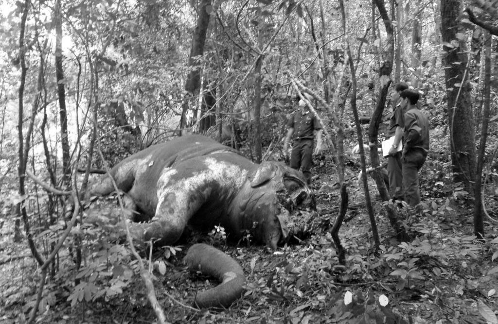 'Rừng lặng' – tương lai đau đớn chờ đợi các cánh rừng ở Việt Nam