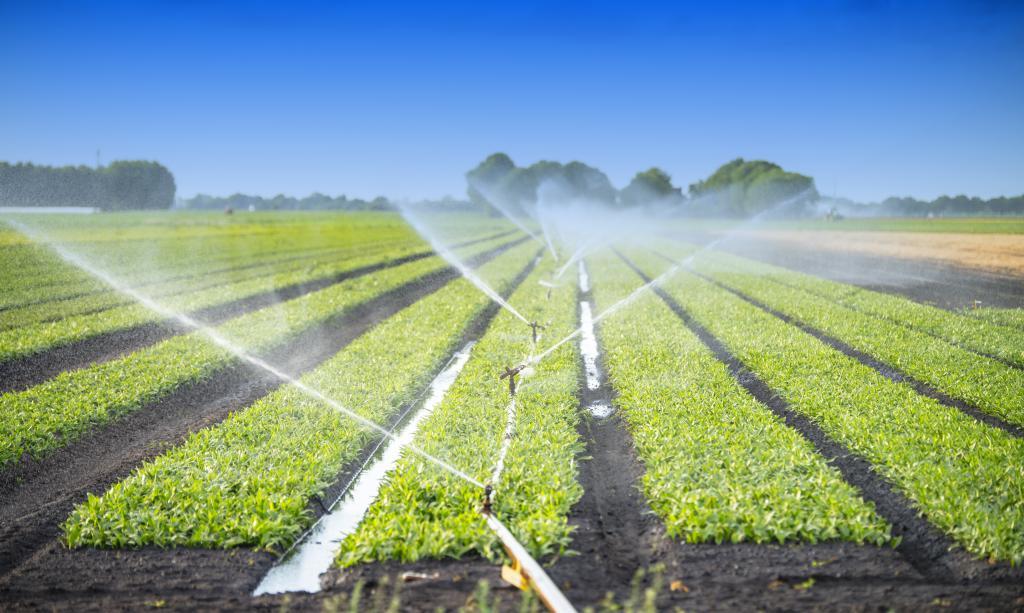 Nông nghiệp: Vừa là nguyên nhân, vừa là nạn nhân của ô nhiễm nguồn nước