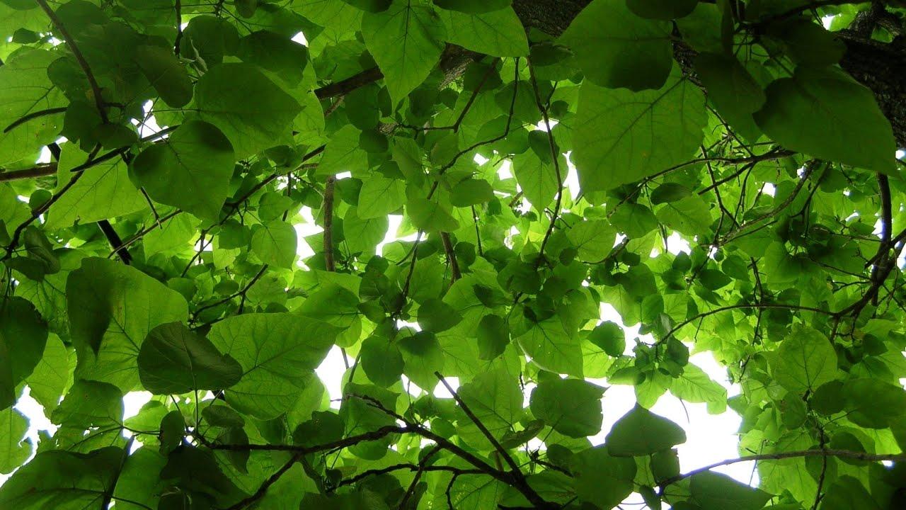 Một câu chuyện đáng suy ngẫm về bảo vệ cây xanh ở Đức