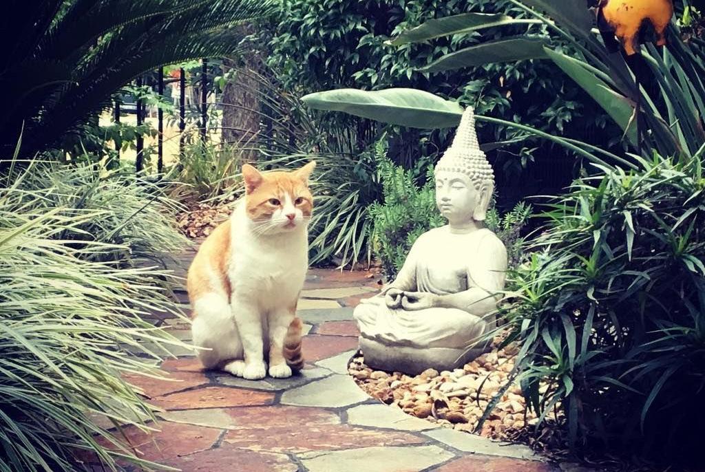 Phật giáo và quyền của động vật