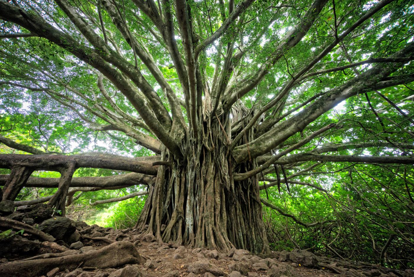 Những câu nói nổi tiếng về thiên nhiên