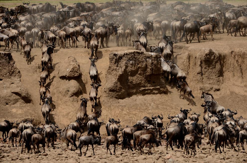Loạt ảnh tuyệt đẹp về châu Phi hoang dã của Essdras M Suarez