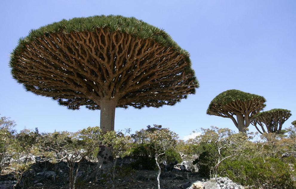 Chùm ảnh: Socotra – hòn đảo kỳ dị giữa Ấn Độ Dương