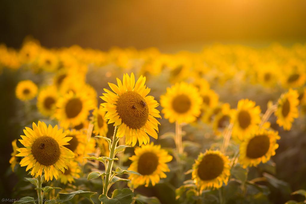 10 điều chứng tỏ bạn đang đi đúng quỹ đạo của hạnh phúc