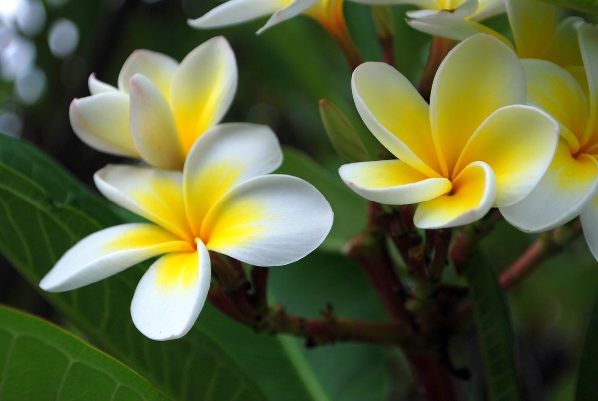 30 câu nói của thiền sư Thích Nhất Hạnh giúp bạn đến gần với hạnh phúc hơn