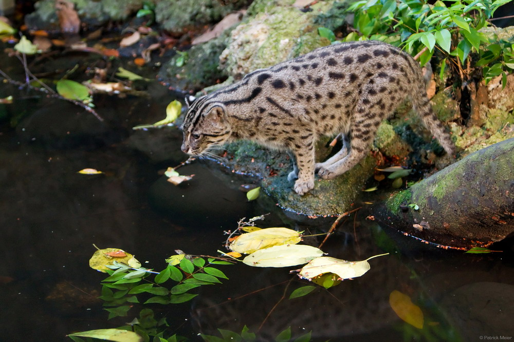 Chùm ảnh: Các loài động vật độc đáo của rừng U Minh Thượng