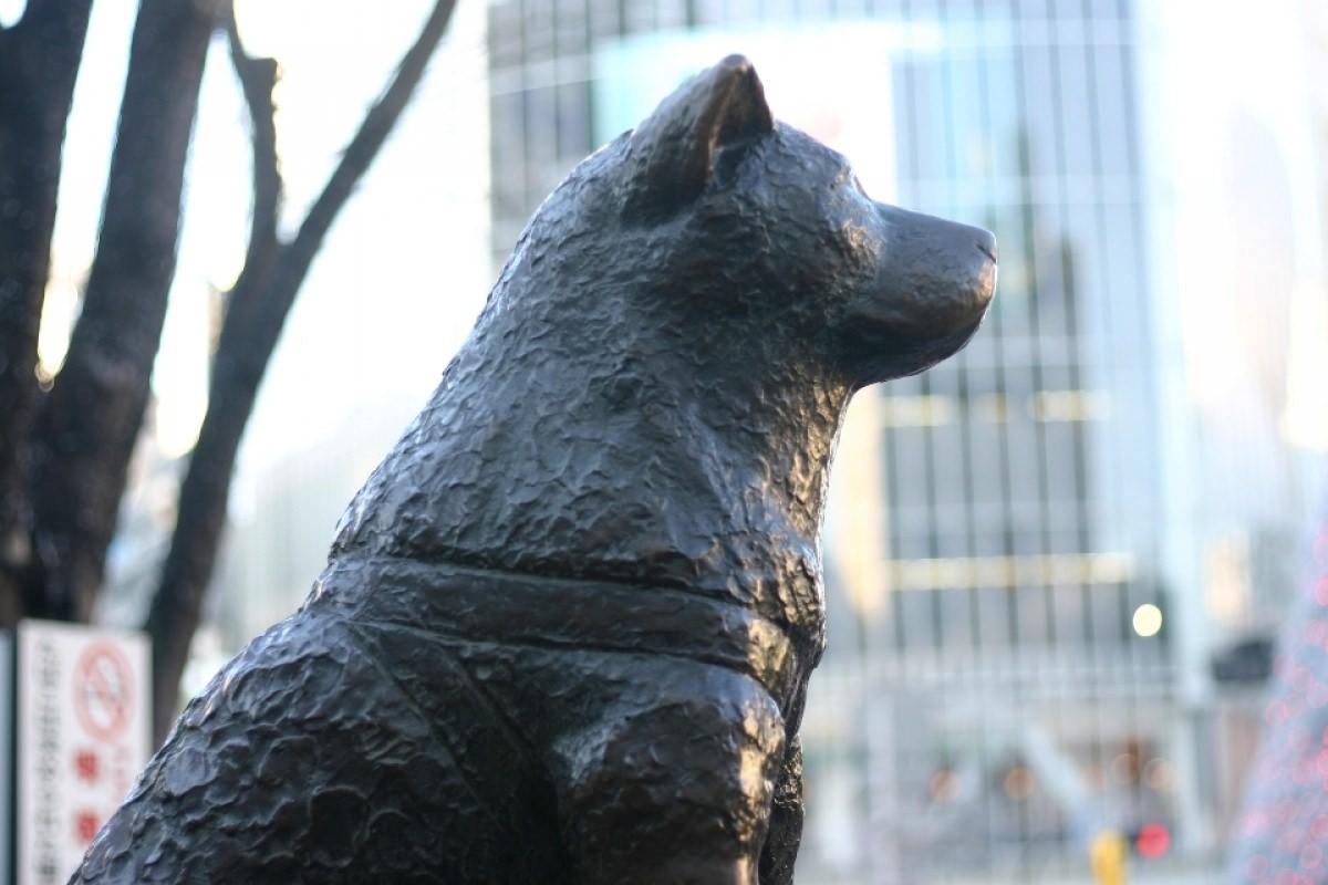 Hachiko – câu chuyện lịch sử về lòng trung thành của loài chó