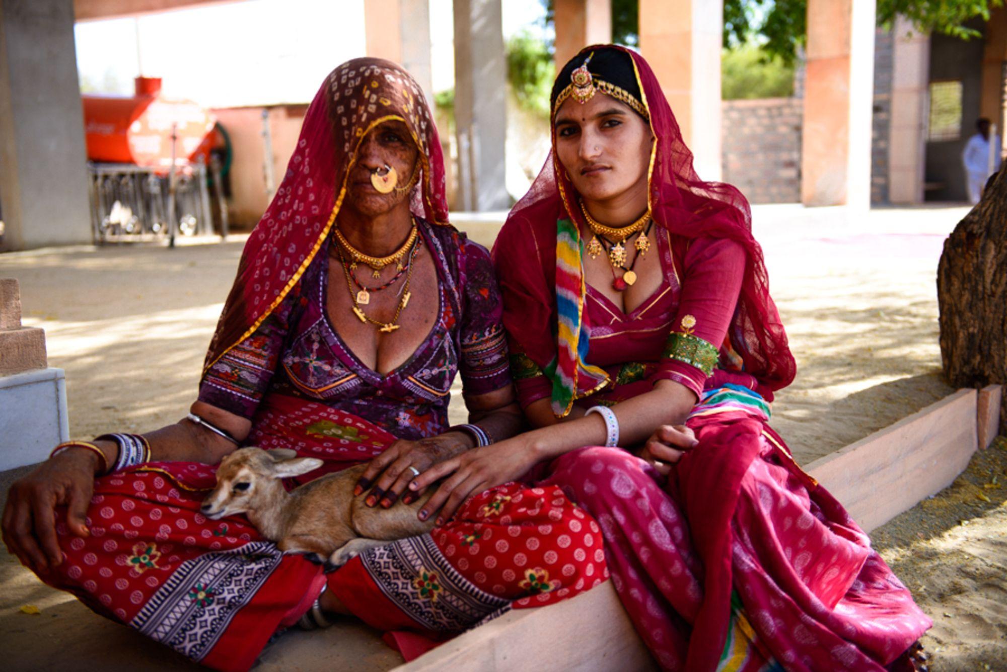 Đạo luật không ăn thịt, không chặt cây trong cộng đồng người Bishnoi