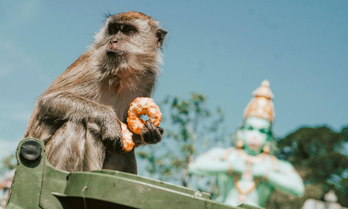 Chùm ảnh: Loài khỉ chung sống với người ở thủ đô của Malaysia