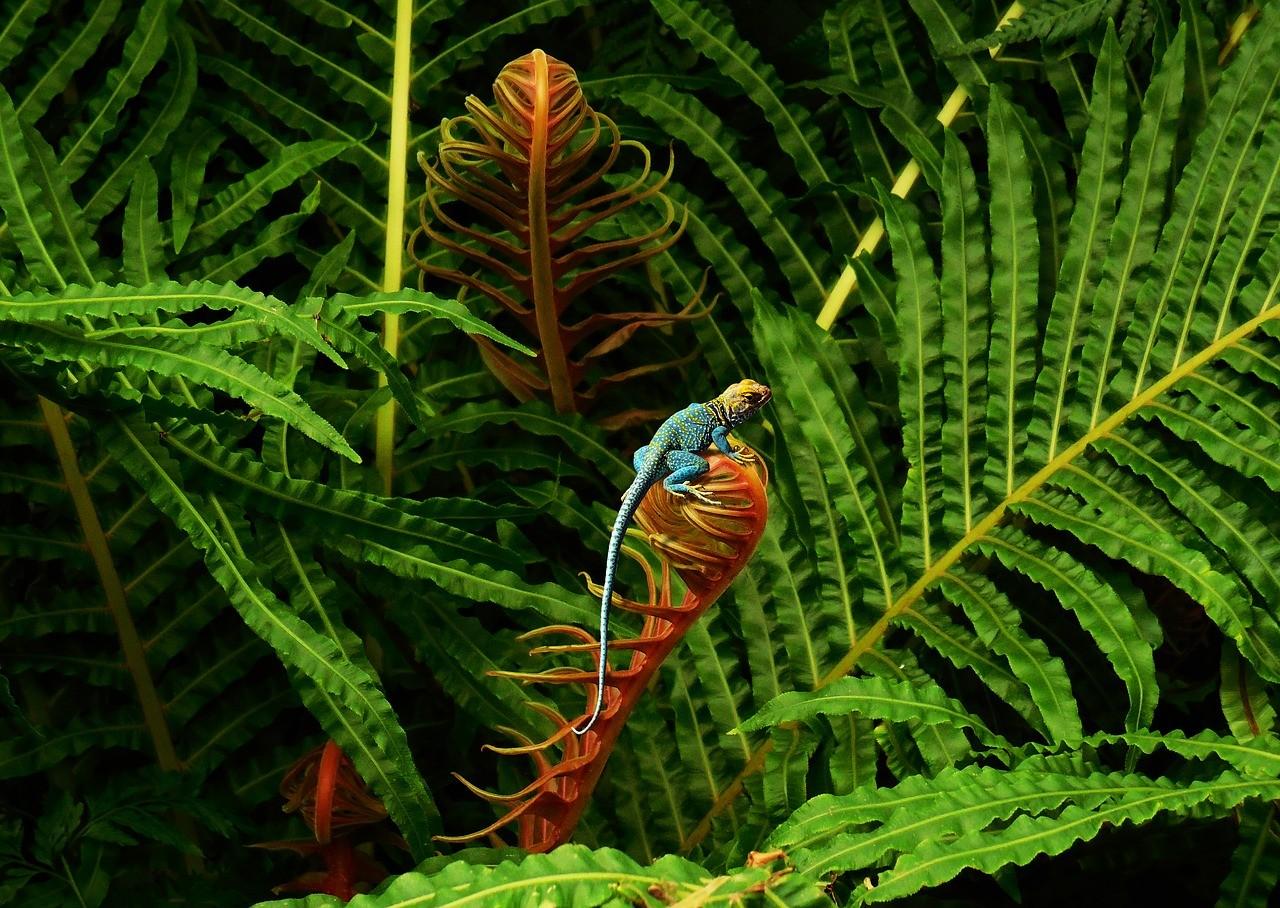 Điều cần biết về đa dạng sinh học và bảo tồn đa dạng sinh học