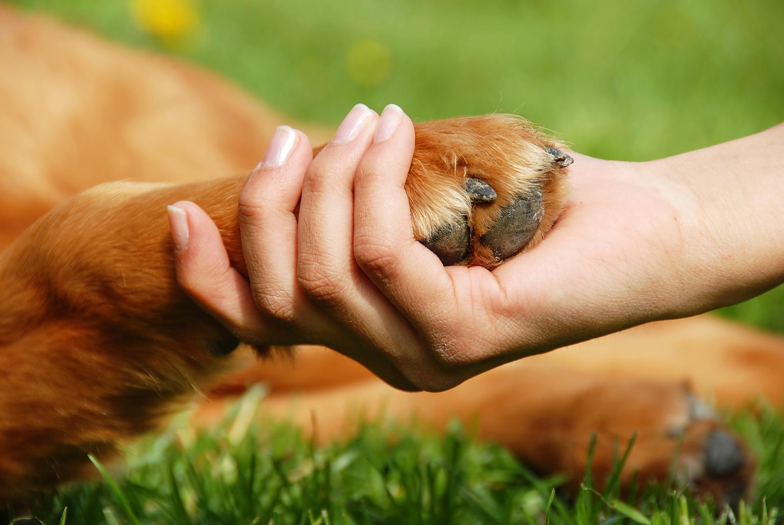 Tình bạn vĩ đại giữa loài chó và loài người