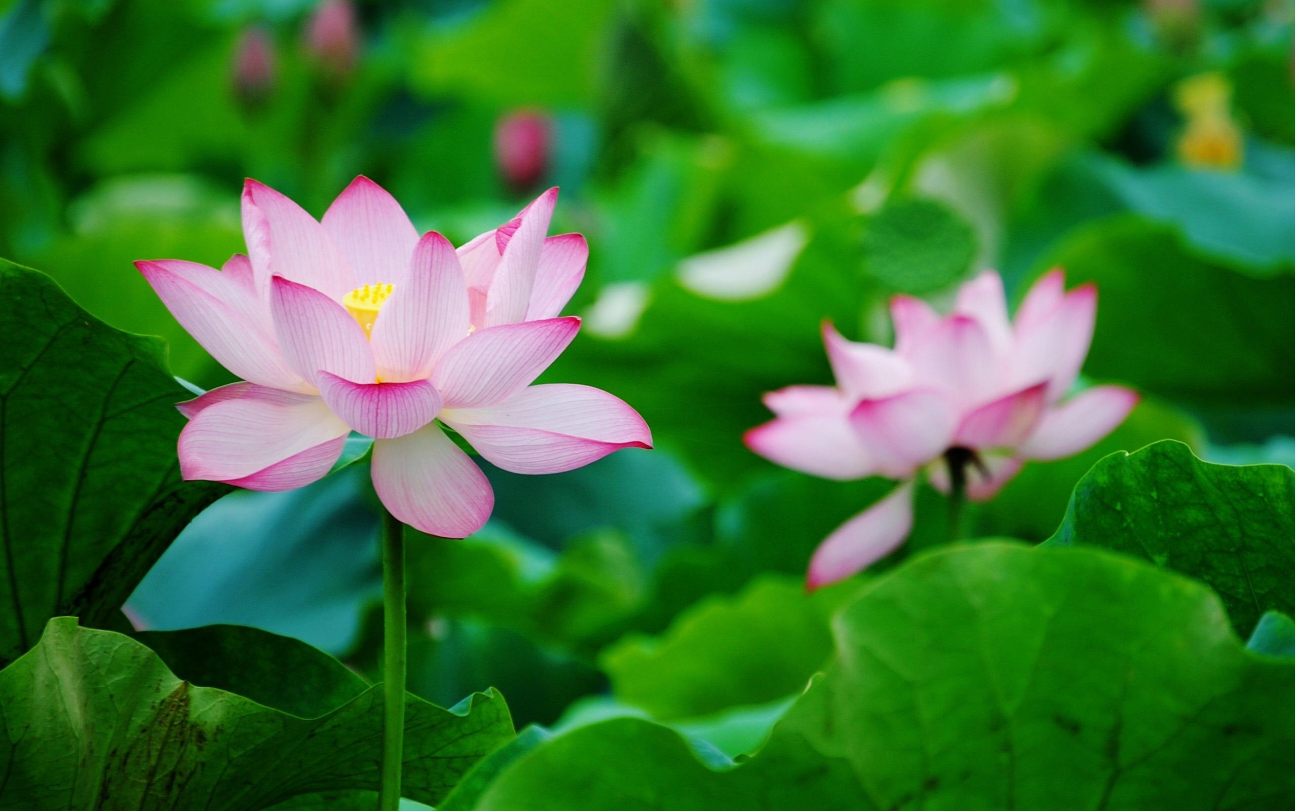 Đọc và suy ngẫm về 66 lời minh triết của đạo Phật
