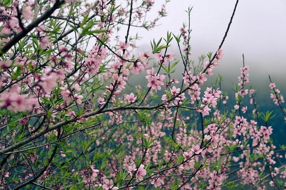 Những chiến thắng lịch sử vào mùa xuân của dân tộc Việt Nam