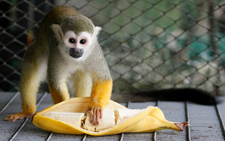 Bài học lớn từ câu chuyện 5 con khỉ và 1 nải chuối