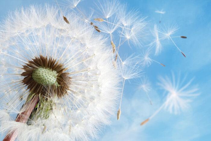 Thiền và bí mật của sự giải thoát phía sau tiếng thở dài