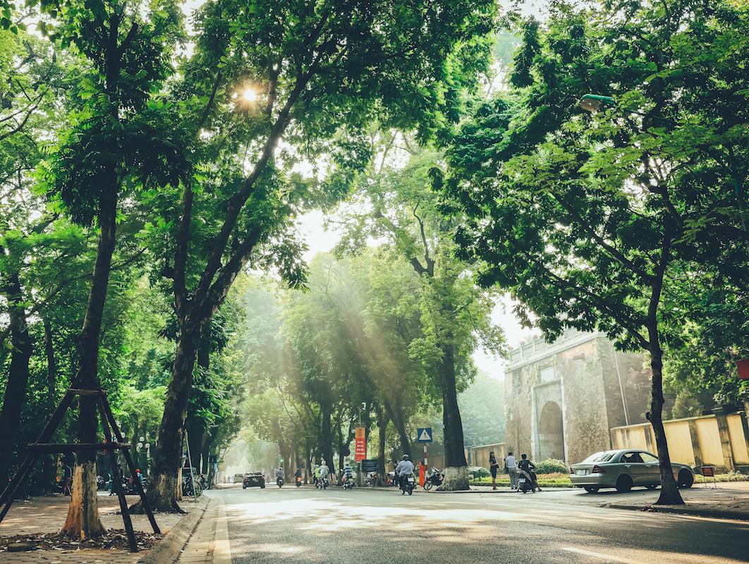 Bảo vệ rừng: Bắt đầu từ những hàng cây trong thành phố…