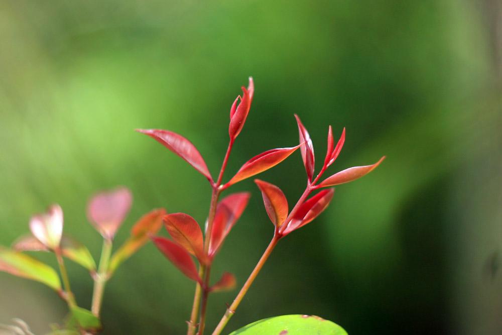 Những câu thơ mùa xuân bất tử