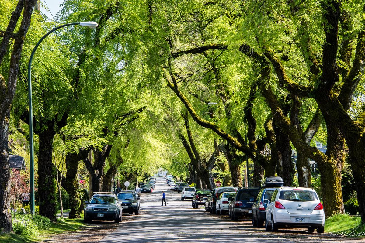 Một số quan điểm về quản lý cây xanh đô thị