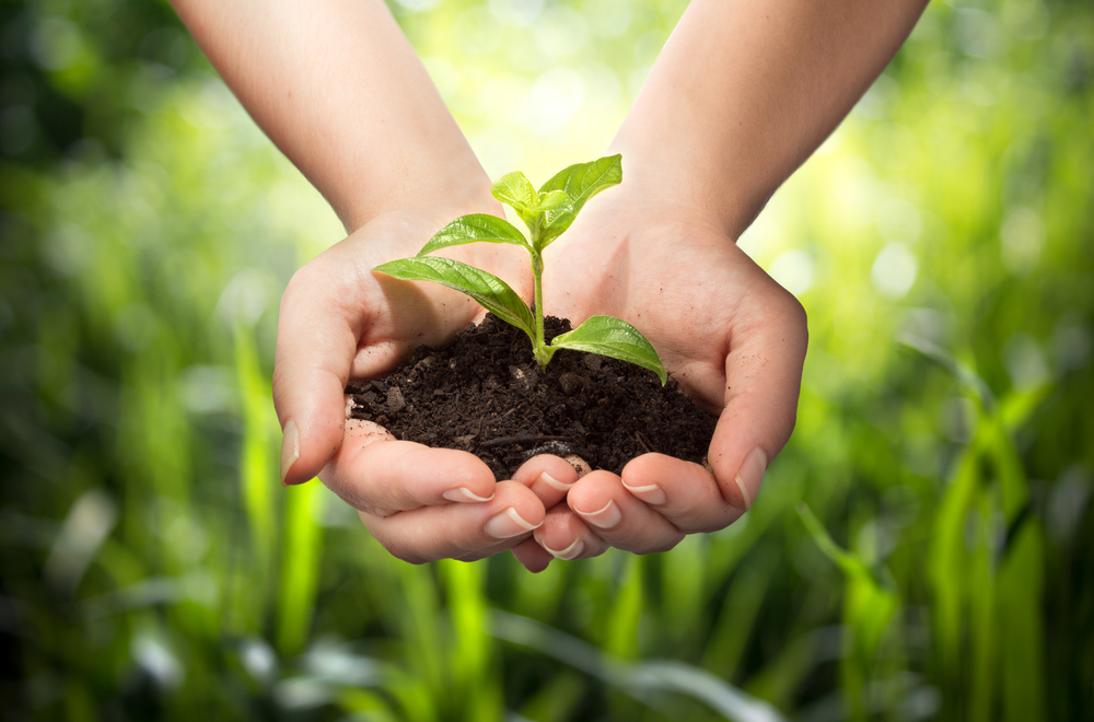 Tết trồng cây – tư tưởng lớn của Bác Hồ về bảo vệ môi trường