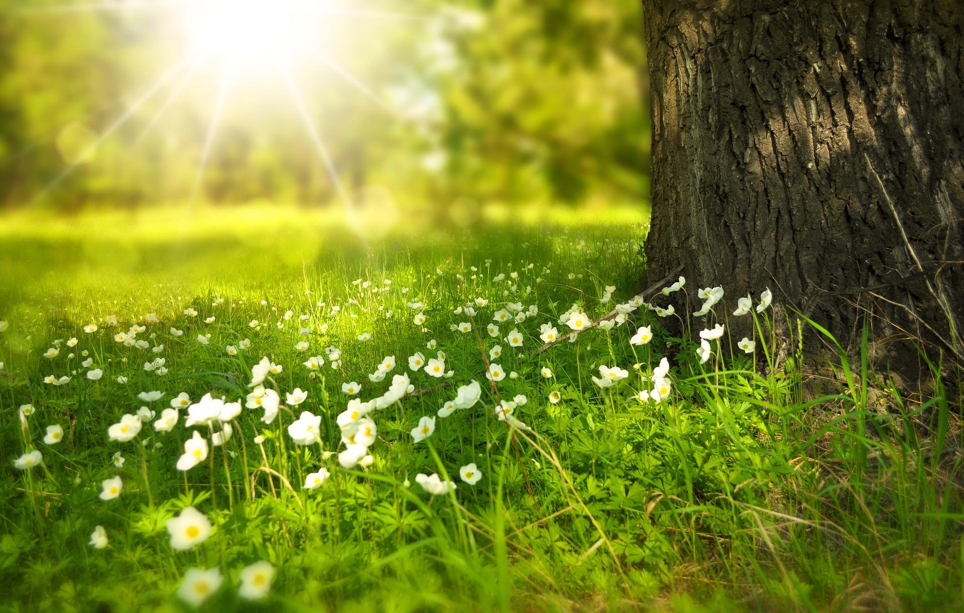 Niềm vui lớn nhất nhất trong mùa xuân của cuộc đời là gì?