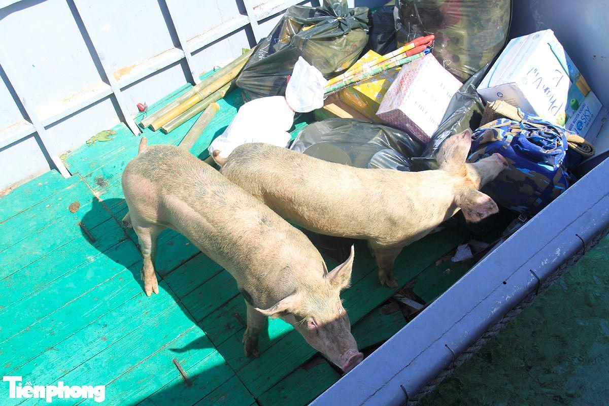Năm Hợi, xem ảnh những chú lợn ỉn ở Trường Sa - ảnh 3