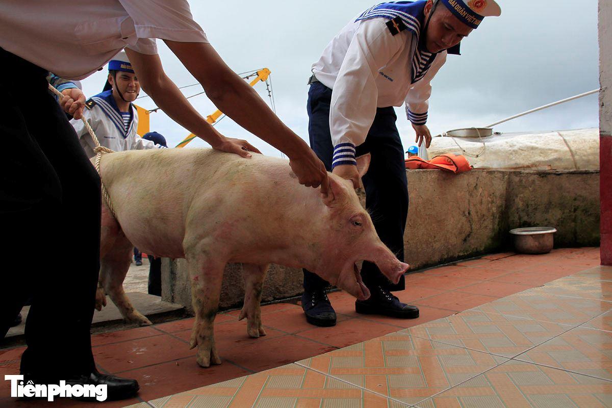 Năm Hợi, xem ảnh những chú lợn ỉn ở Trường Sa - ảnh 6
