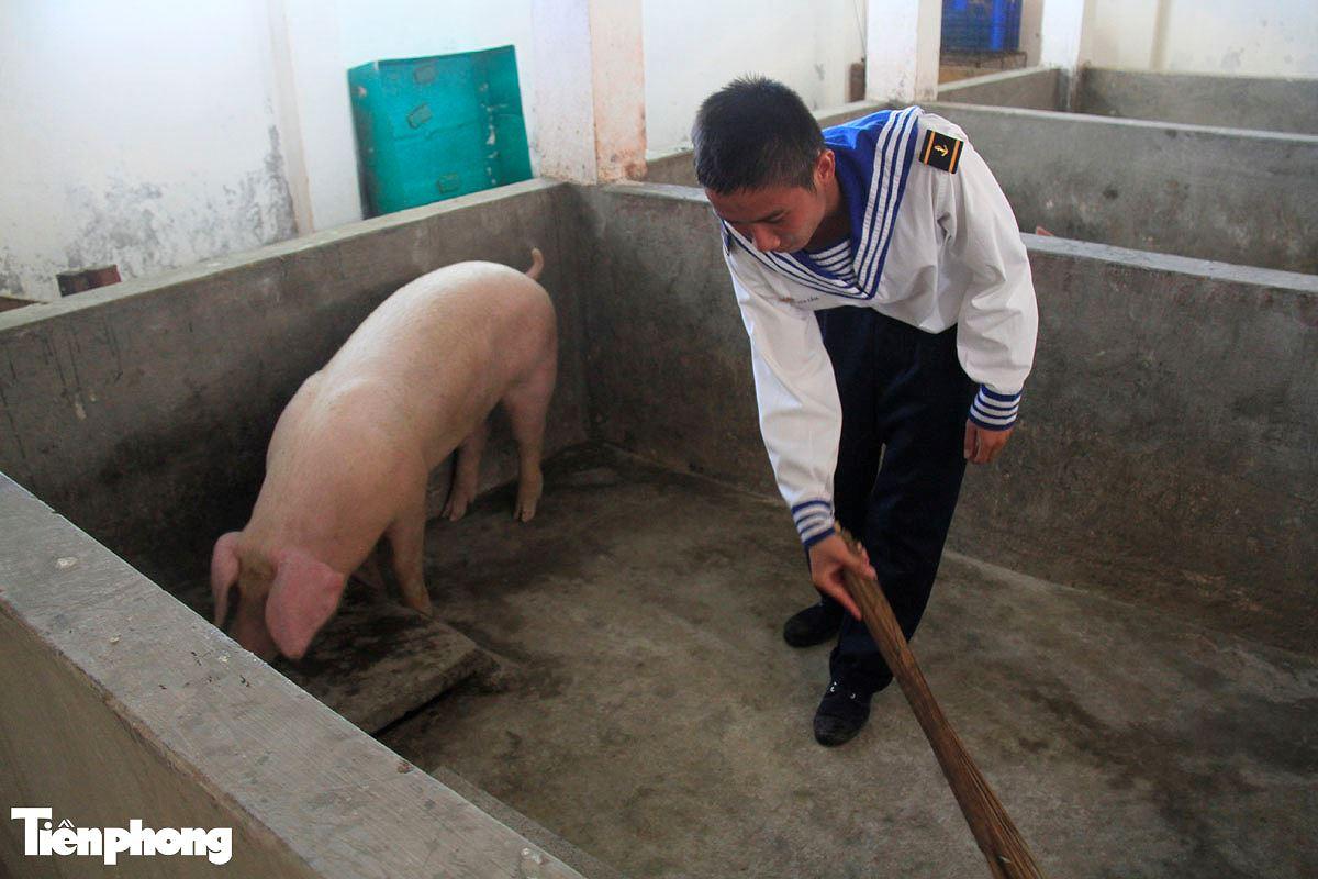Năm Hợi, xem ảnh những chú lợn ỉn ở Trường Sa - ảnh 8