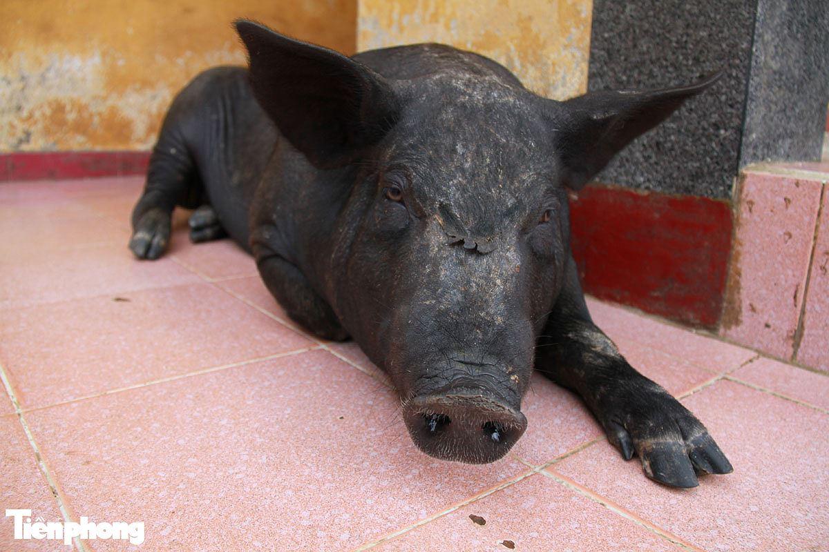 Năm Hợi, xem ảnh những chú lợn ỉn ở Trường Sa - ảnh 9