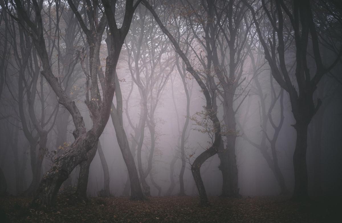 Chùm ảnh: Hiện tượng bí ẩn ở Hoia Baiciu – khu rừng ma ám nổi tiếng châu Âu