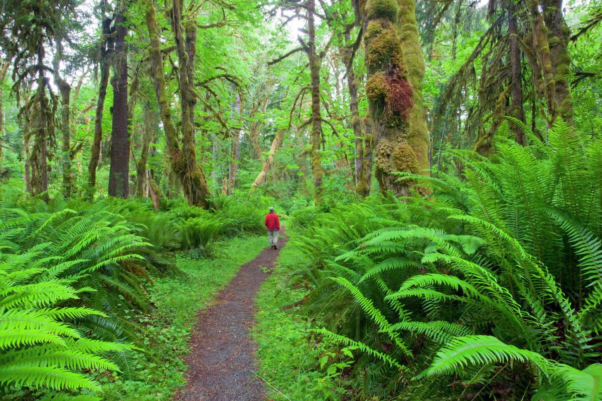 Thiên nhiên nuôi dưỡng lòng tốt, hạnh phúc và sức sáng tạo như thế nào?