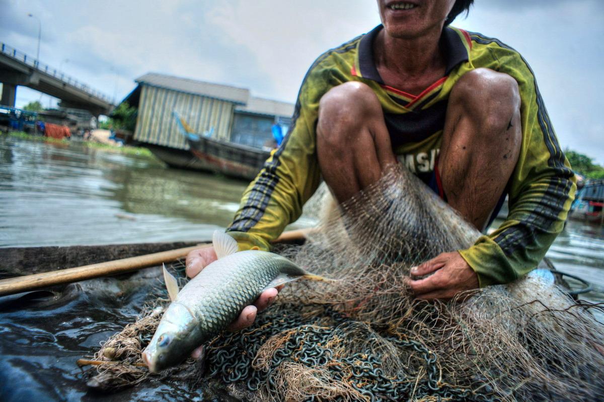 Biến đổi khí hậu ở đồng bằng sông Cửu Long: Sẽ tìm cơm và cá ở đâu?