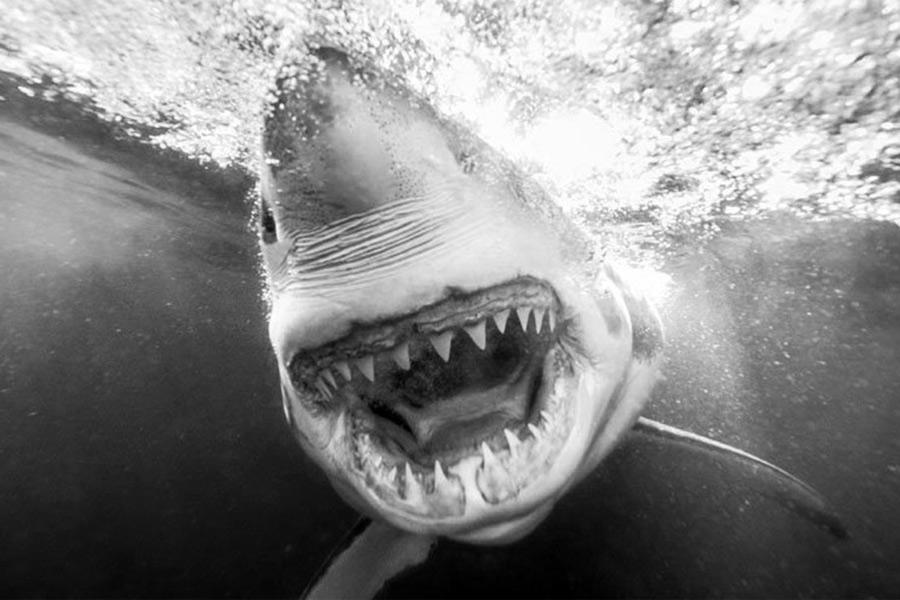 Vụ cá mập tấn công thảm khốc nhất lịch sử nhân loại