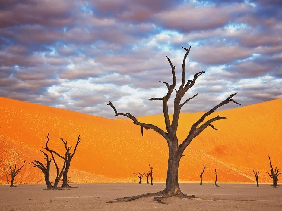 Công viên Namib Naukluft, Namibia: Những trảng cát đỏ rực và cây khô khẳng khiu khiến Namibia có cảnh tượng như trên sao Hỏa. Ảnh: Getty.