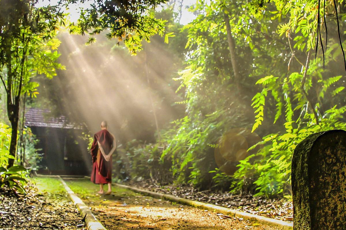 Mối liên hệ giữa đạo Phật và lối sống gần gũi với thiên nhiên