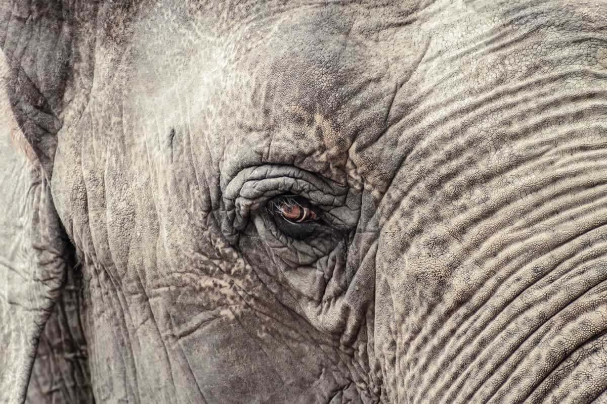 Vì sao con người nên đối xử nhân đạo với mọi loài động vật?