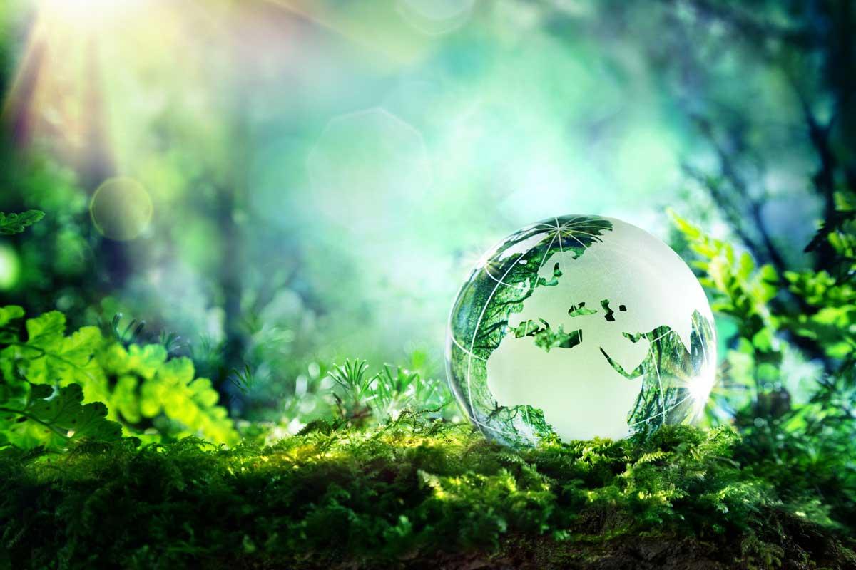 Bức tranh tổng quan về môi trường – sinh thái của Trái đất