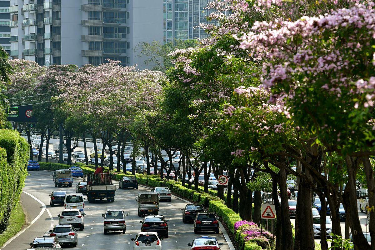 Tầm nhìn phủ xanh Singapore của ông Lý Quang Diệu