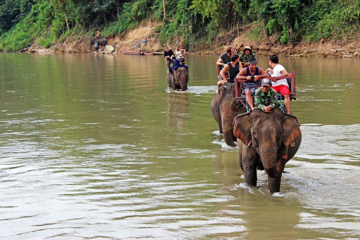 Du lịch cưỡi voi: Một loại hình du lịch cần phải được xóa sổ