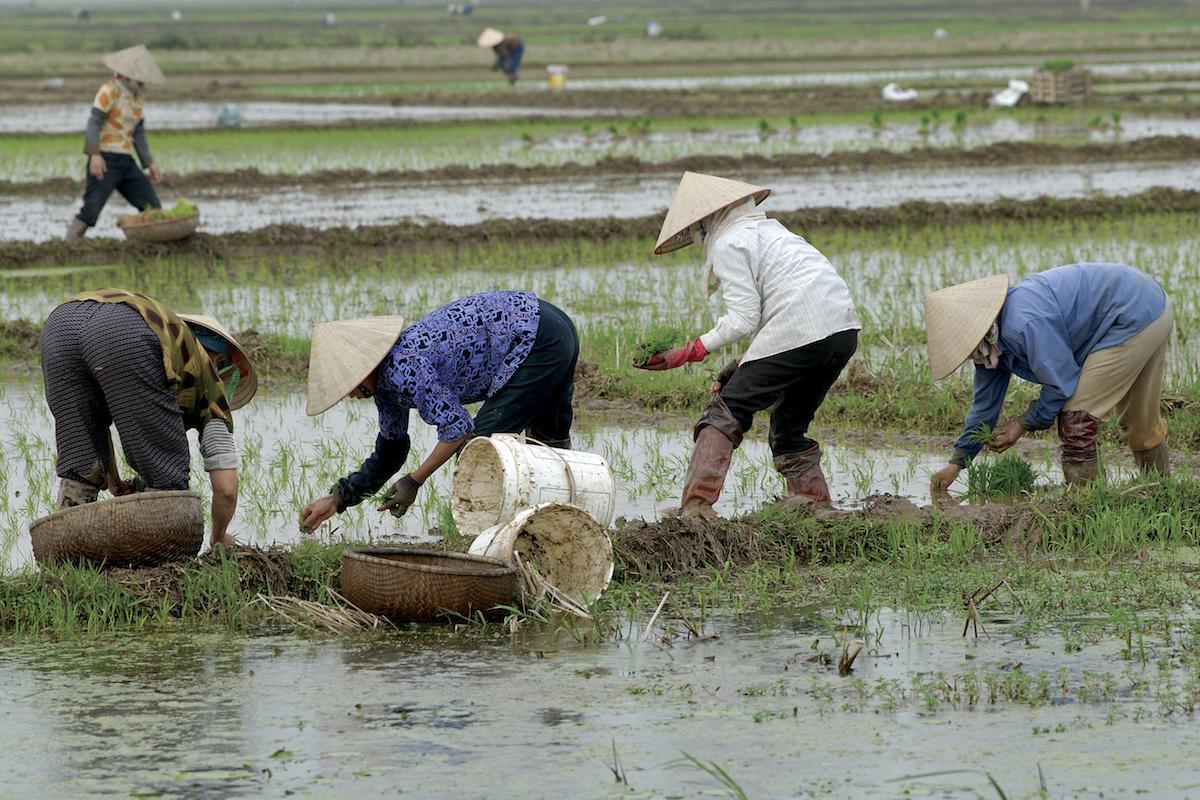 Nông dân phương Tây giàu vì biết hợp tác, nông dân Việt nghèo vì mạnh ai nấy lo?