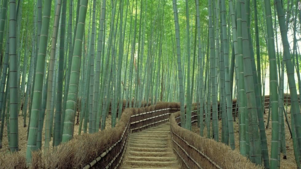 Sagano (Kyoto): Được coi là một trong những khu rừng đẹp nhất thế giới, những cây tre xanh mướt đung đua trong gió tạo cho nơi này một không khí huyền ảo, thần tiên.