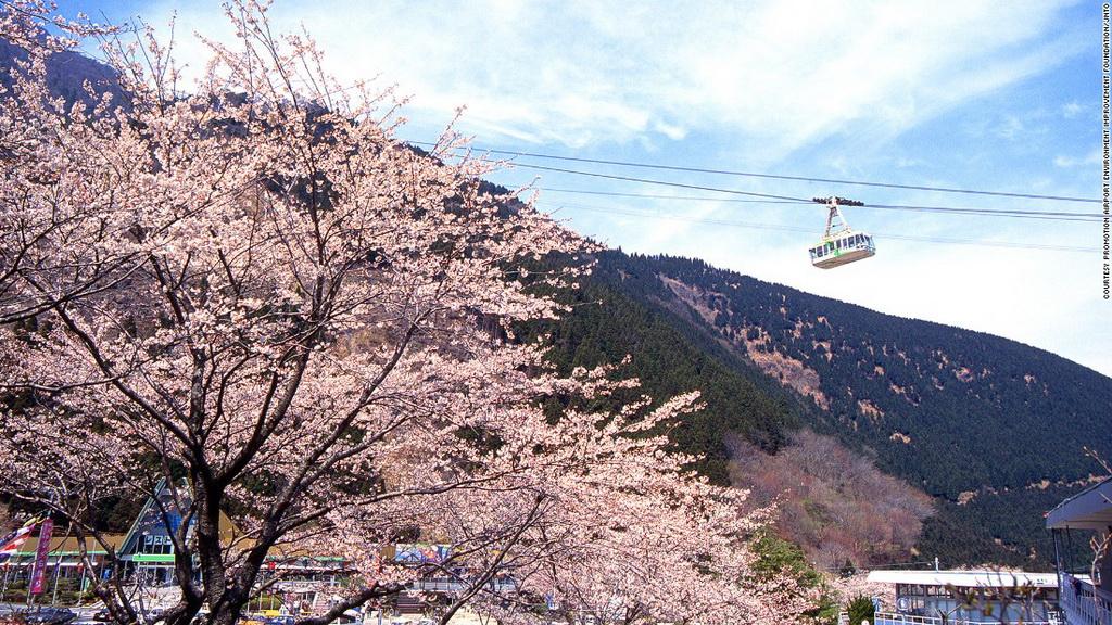 Cáp treo Kintetsu Beppu (Oita): Tuyến cáp treo này có thể đưa 101 hành khách lên đỉnh núi Tsurumi ở độ cao 1.375 m trong 10 phút. Vào mùa xuân, từ trên đỉnh núi, du khách có thể chiêm ngưỡng khung cảnh lộng lẫy khi hơn 2.000 cây anh đào nở hoa.