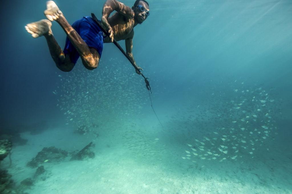 Người Bajau là những thợ lặn cừ khôi bởi họ có thể lặn ở độ sâu tới 30 m để săn cá, tìm ngọc trai hay hải sâm.