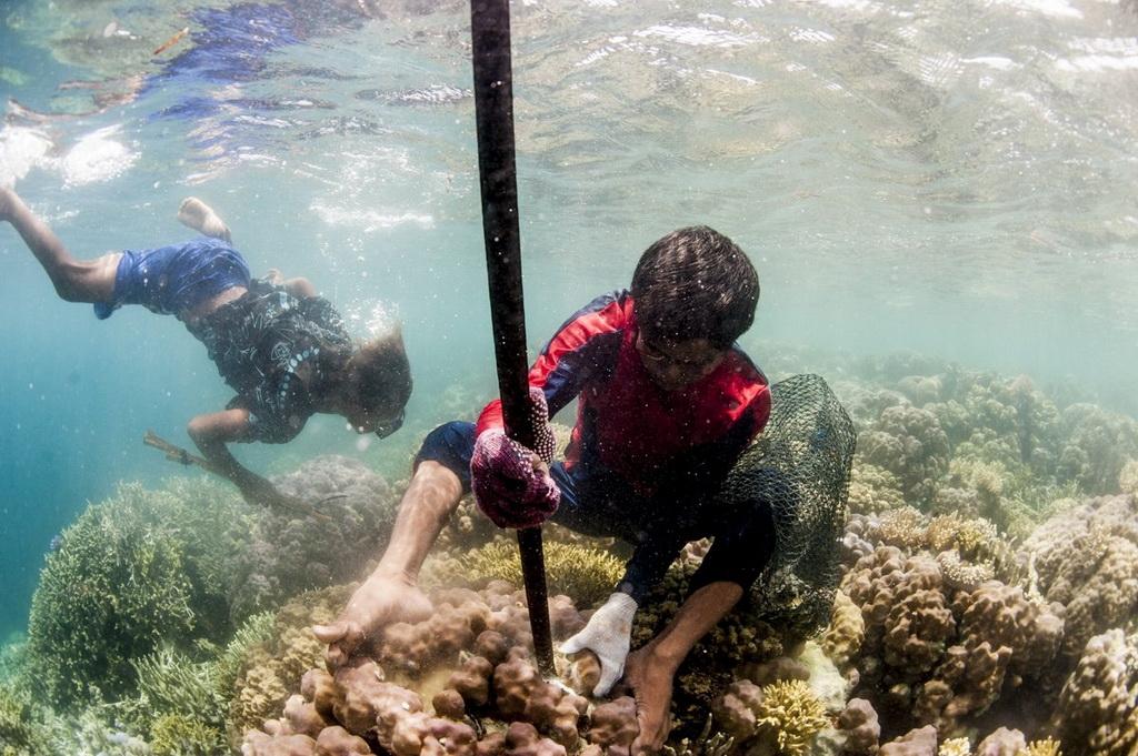 Người Bajau kiếm sống bằng cách dùng mìn tự chế để đánh bắt hải sản. Sau đó, họ bán chúng cho các công ty Hong Kong.