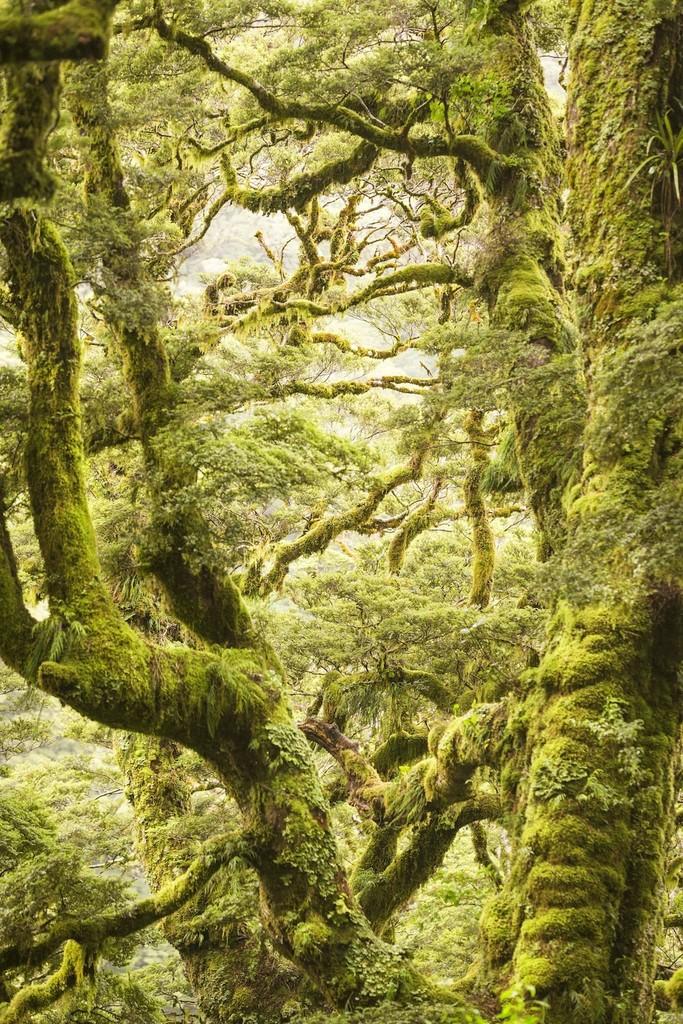 Vườn quốc gia Núi Aspiring nằm ở dãy Alps phía Nam của đảo Nam, New Zealand. Vườn quốc gia này cũng là một phần của Te Wahipounamu, một địa danh bao gồm 4 vườn quốc gia đã được UNESCO công nhận là di sản thế giới vào năm 1990.