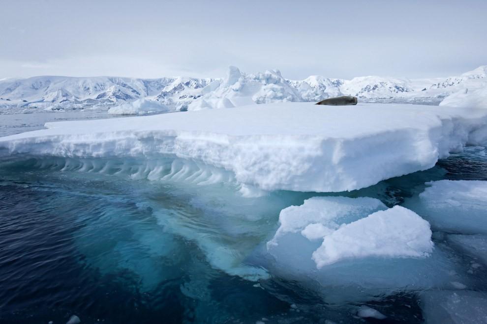 Vịnh Wilhelmina ở Nam Cực với những khối băng tuyết trắng xóa.