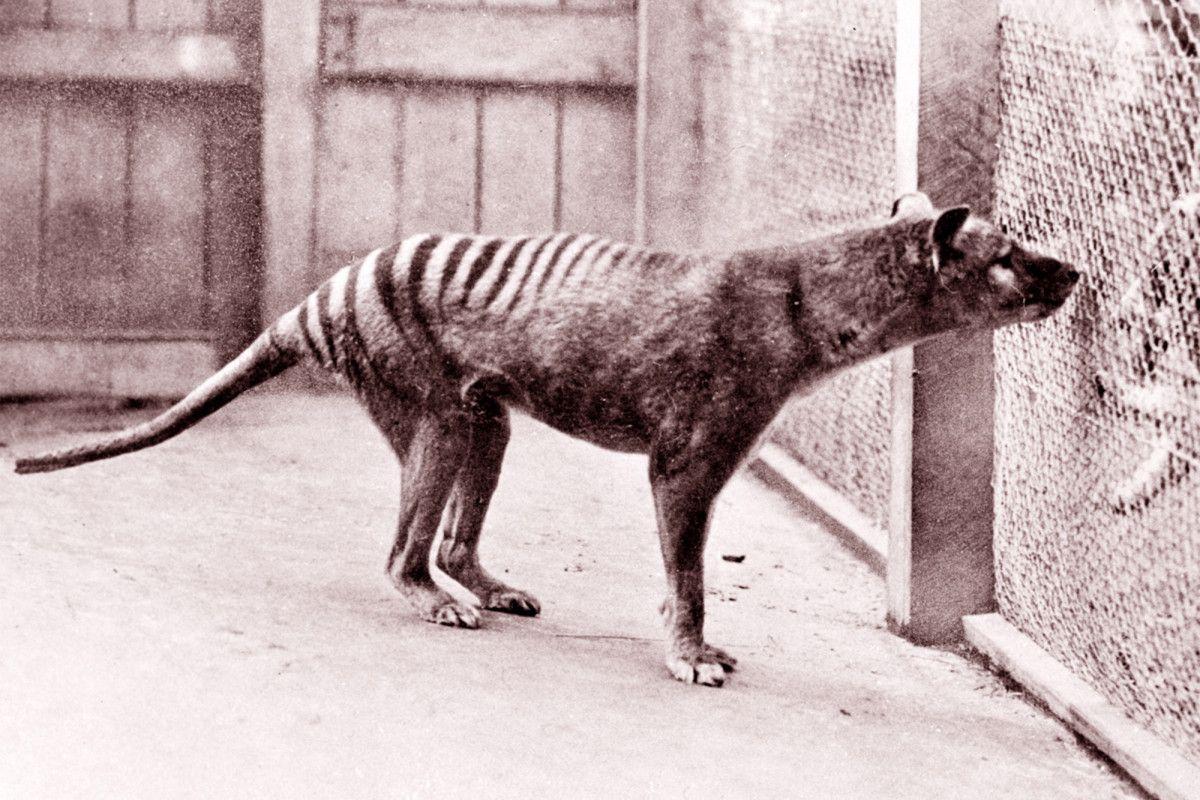 Câu chuyện đau đớn của một số loài vật đã tuyệt chủng do bàn tay con người